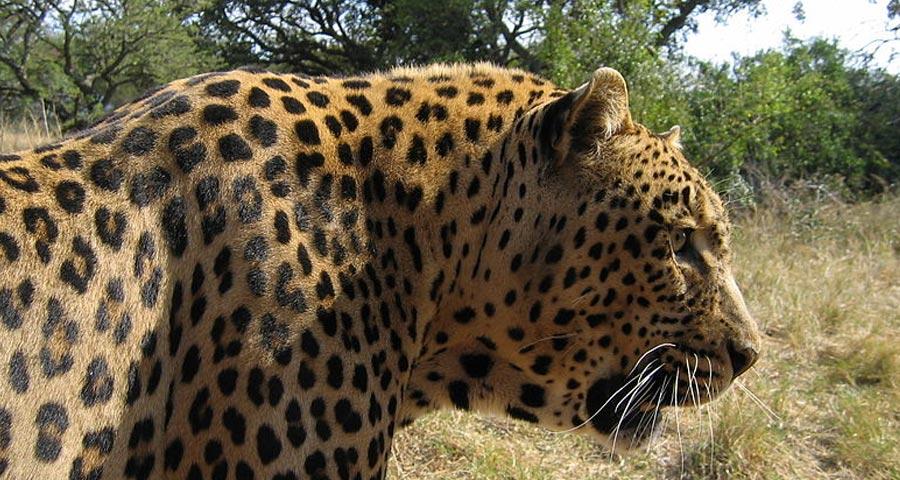 10 reasons to visit Mapungubwe