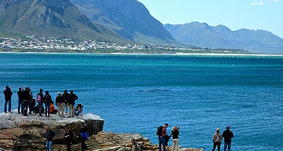 Hermanus – A whale of a time