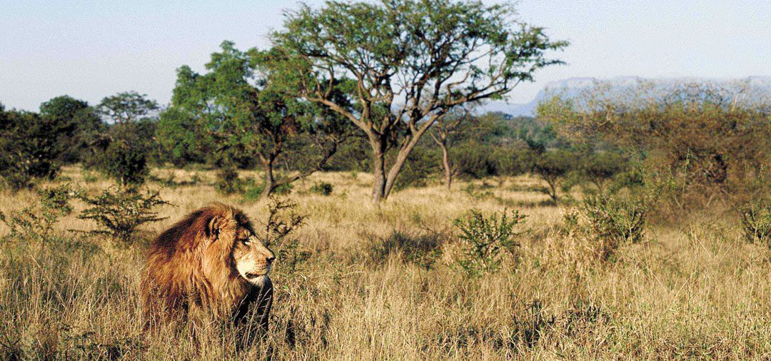 Kruger to Cape Town- Grand South Africa tour