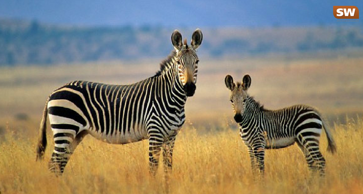 4 destinations in Africa that will please young and old!