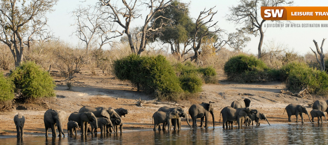 The 5 best things to do on a first-time Botswana safari