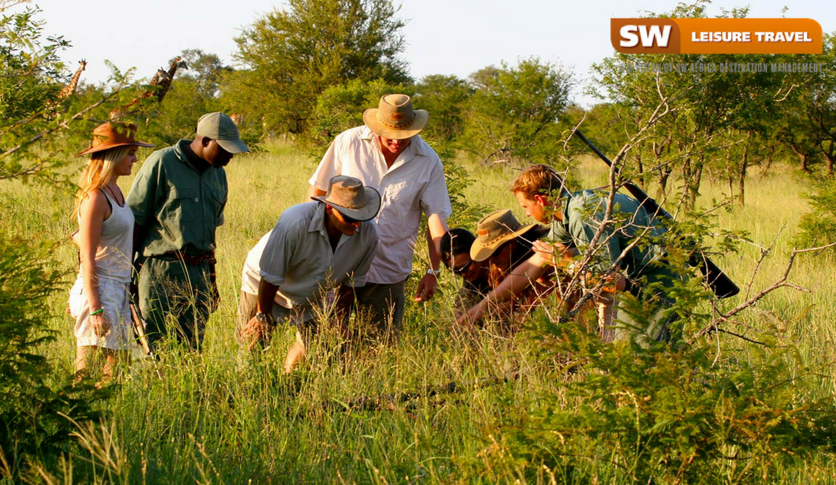 Safari Experience in Africa