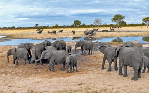 Elephant-at-the-waterhole-in-Hwange-National-Park (1)