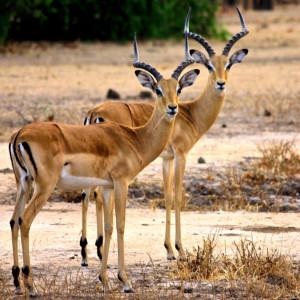 Malawi wildlife 9083344