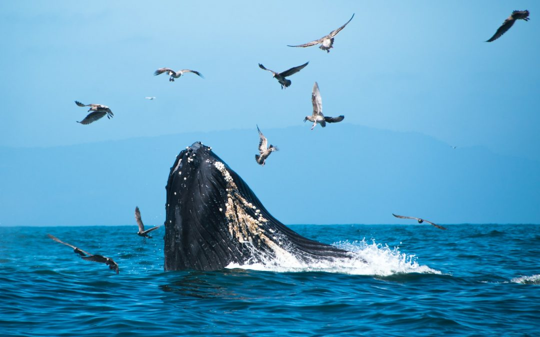 Cape Town, Wine & Whales