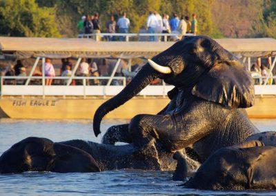 Victoria Falls, Chobe, Okavango, Cape Town & Winelands Combination